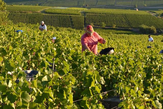 Vineyards in Bourgogne (Burgundy)