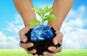 COP 21 activities