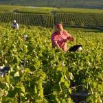 Vineyards in Bourgogne