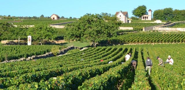 vineyards in Meursalt, France. © Diane Roberts
