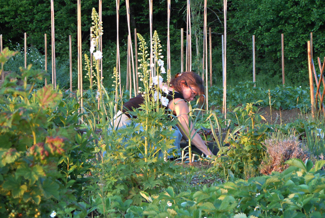 Lee Yanowitch working in her organic garden.