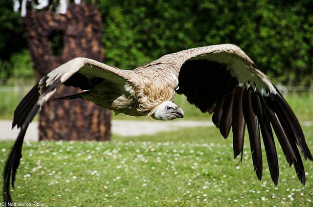 Eagleflying-web
