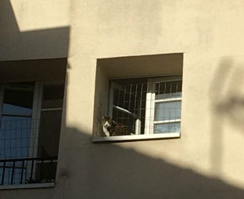 Pets shoudl avoid freefall from apartment windows. Photo courtesy of author