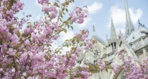 Brandie Raasch Notre Dame Paris