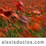 Alexis Duclos